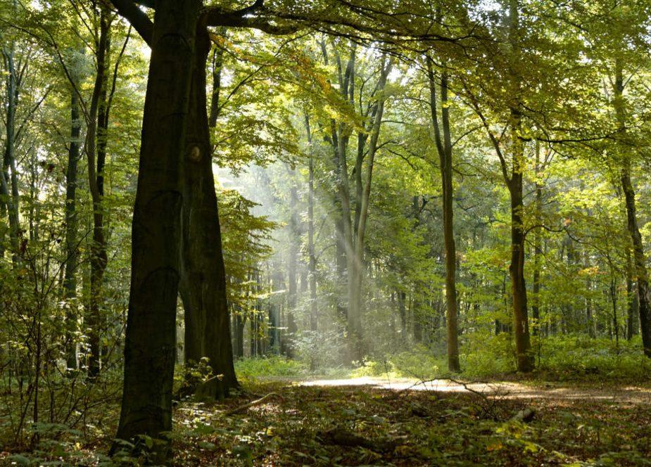 land_Image_2006_10_15_022